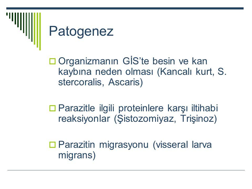Patogenez Organizmanın GİS'te besin ve kan kaybına neden olması (Kancalı kurt, S. stercoralis, Ascaris)