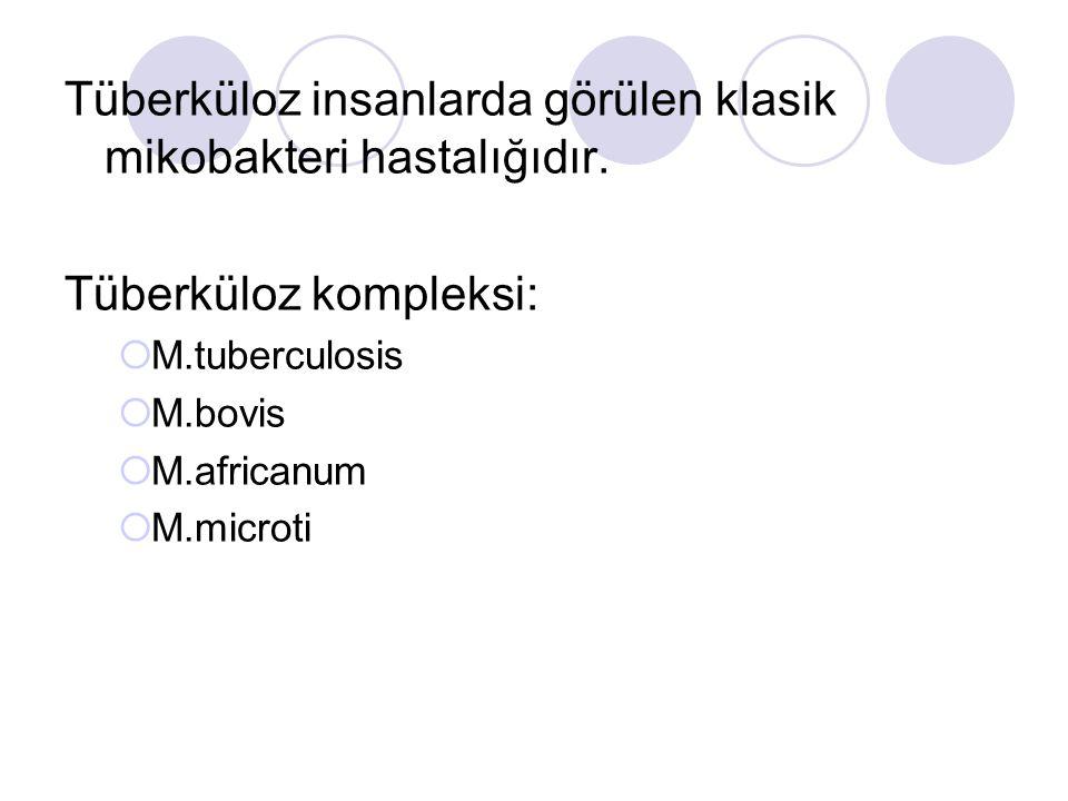 Tüberküloz insanlarda görülen klasik mikobakteri hastalığıdır.
