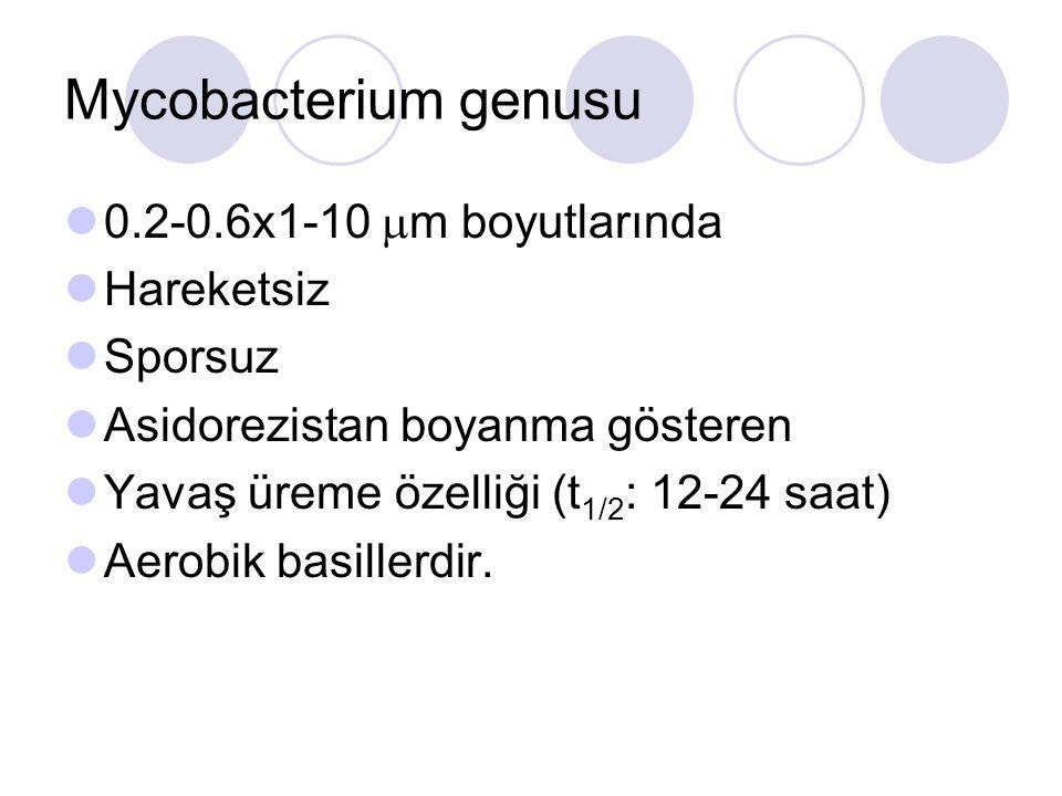 Mycobacterium genusu 0.2-0.6x1-10 m boyutlarında Hareketsiz Sporsuz