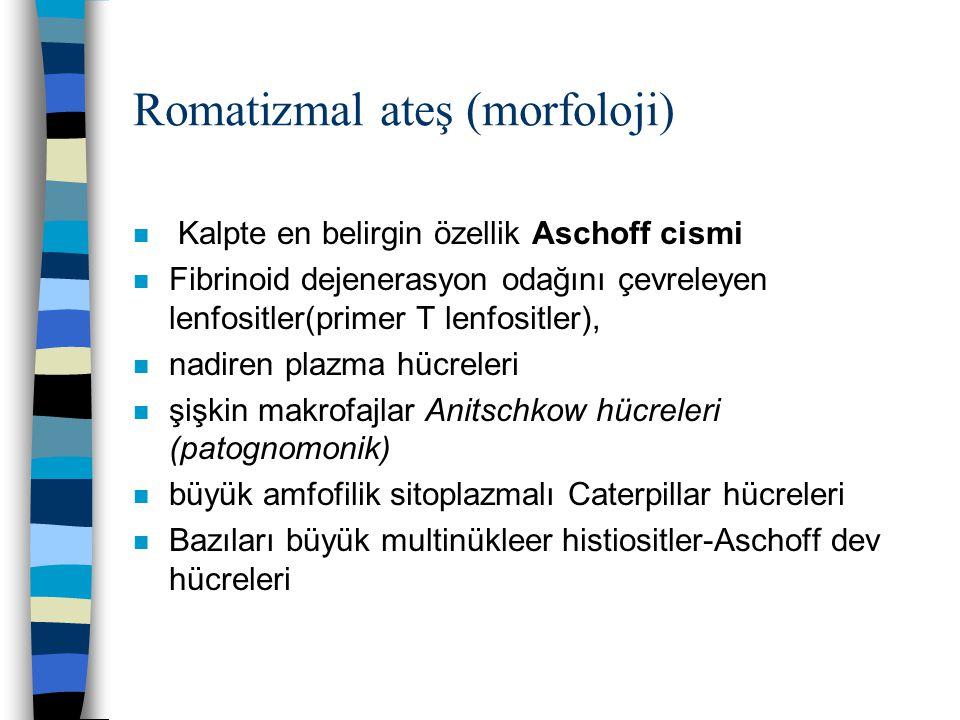 Romatizmal ateş (morfoloji)