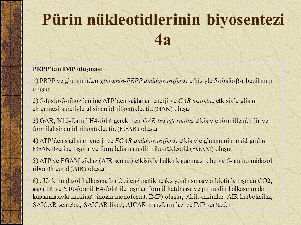 Pürin nükleotidlerinin biyosentezi 4a