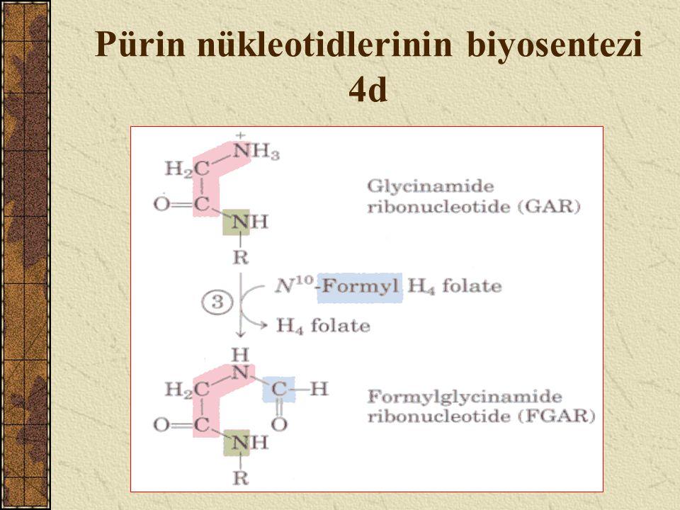 Pürin nükleotidlerinin biyosentezi 4d