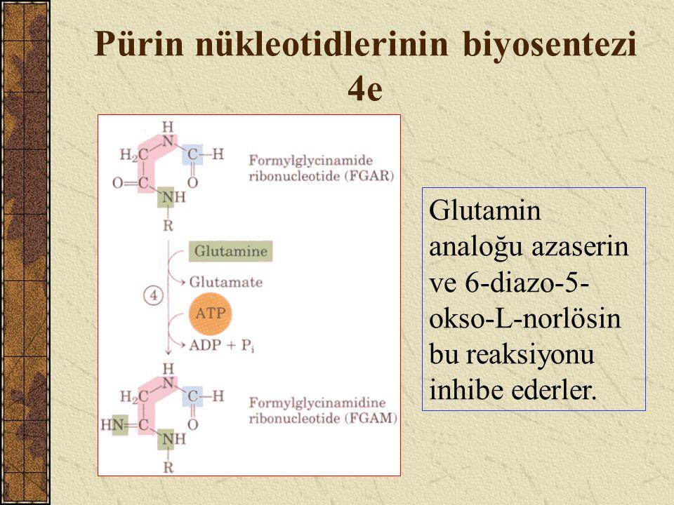 Pürin nükleotidlerinin biyosentezi 4e