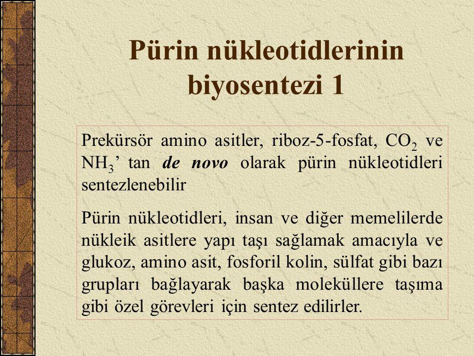 Pürin nükleotidlerinin biyosentezi 1