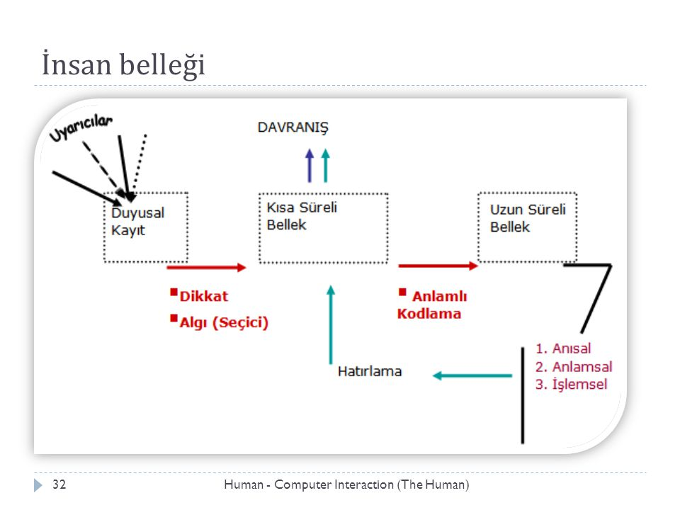 İnsan belleği Human - Computer Interaction (The Human)