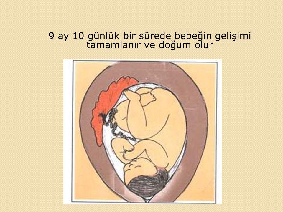 9 ay 10 günlük bir sürede bebeğin gelişimi tamamlanır ve doğum olur