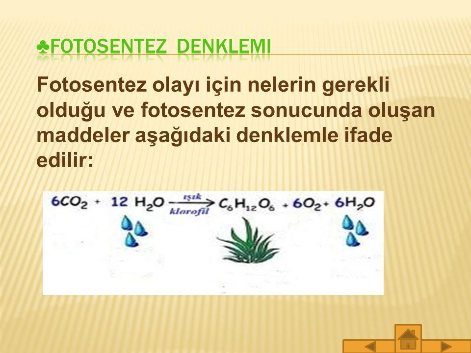 ♣FOTOSENTEZ denklemi Fotosentez olayı için nelerin gerekli olduğu ve fotosentez sonucunda oluşan maddeler aşağıdaki denklemle ifade edilir: