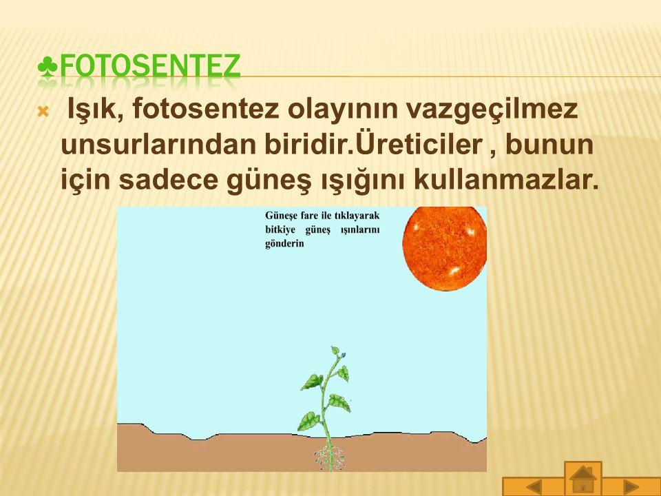 ♣FOTOSENTEZ Işık, fotosentez olayının vazgeçilmez unsurlarından biridir.Üreticiler , bunun için sadece güneş ışığını kullanmazlar.