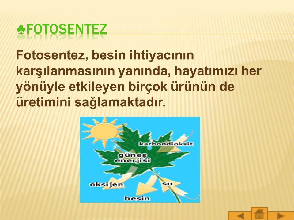 ♣FOTOSENTEZ Fotosentez, besin ihtiyacının karşılanmasının yanında, hayatımızı her yönüyle etkileyen birçok ürünün de üretimini sağlamaktadır.