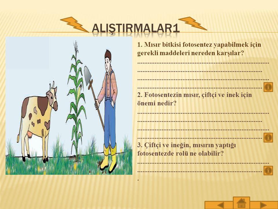 ALIŞTIRMALAR1 1. Mısır bitkisi fotosentez yapabilmek için gerekli maddeleri nereden karşılar