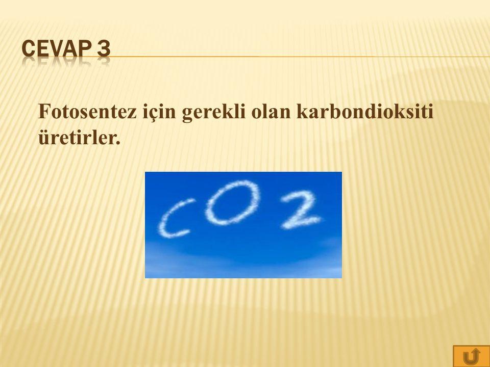 Cevap 3 Fotosentez için gerekli olan karbondioksiti üretirler.