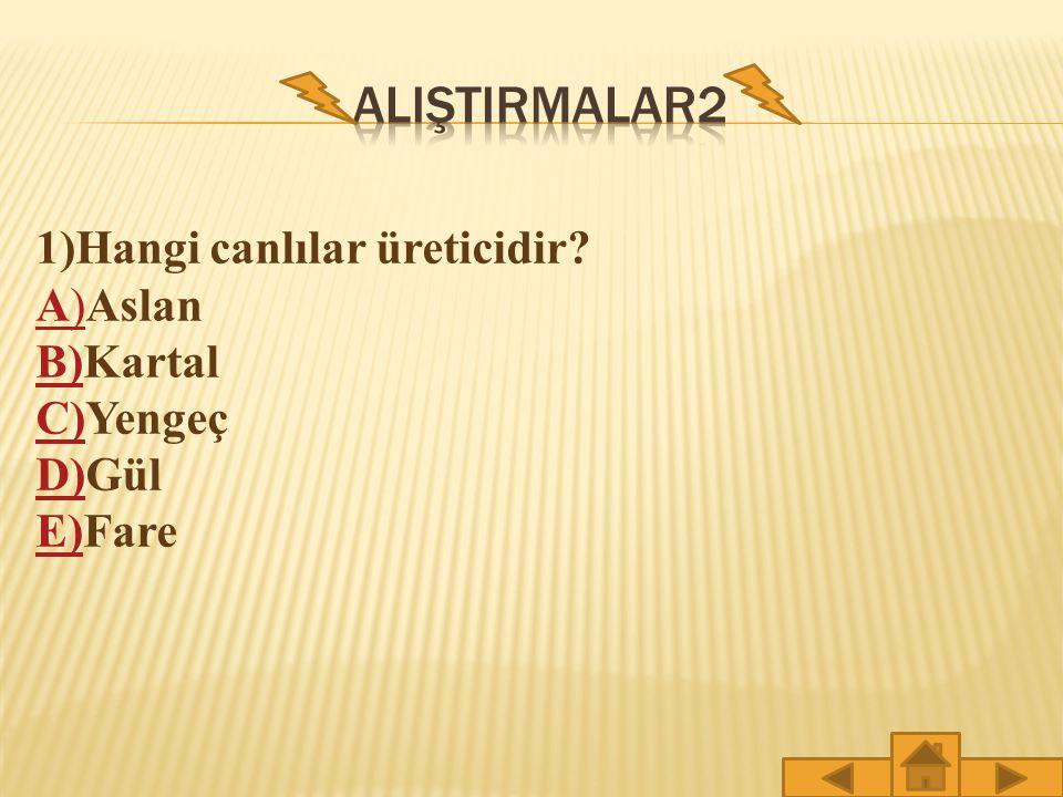 ALIŞTIRMALAR2 1)Hangi canlılar üreticidir A)Aslan B)Kartal C)Yengeç
