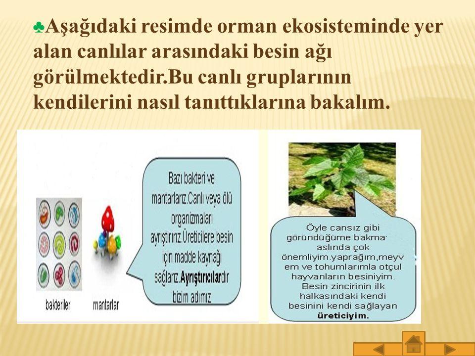 ♣Aşağıdaki resimde orman ekosisteminde yer alan canlılar arasındaki besin ağı görülmektedir.Bu canlı gruplarının kendilerini nasıl tanıttıklarına bakalım.