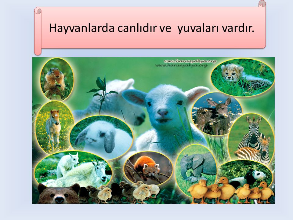 Hayvanlarda canlıdır ve yuvaları vardır.