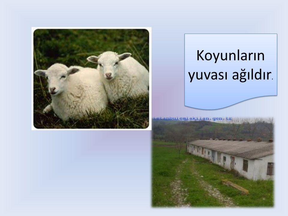 Koyunların yuvası ağıldır.