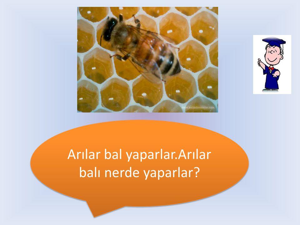 Arılar bal yaparlar.Arılar balı nerde yaparlar