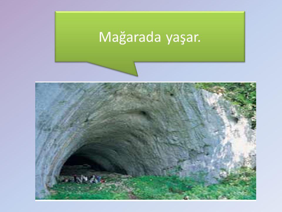 Mağarada yaşar.