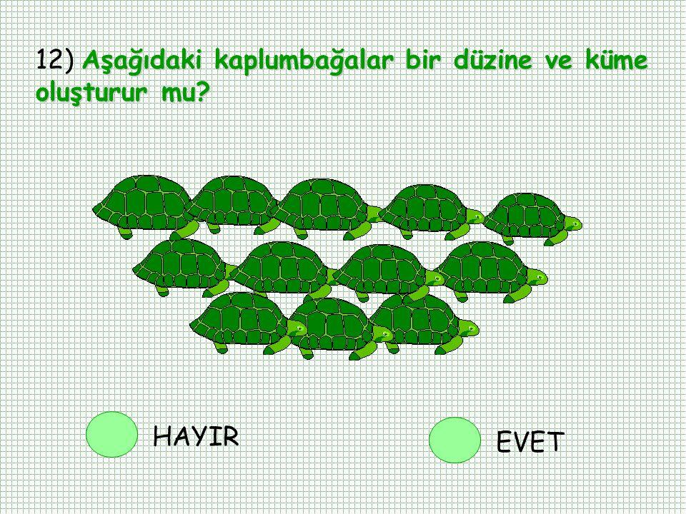 12) Aşağıdaki kaplumbağalar bir düzine ve küme oluşturur mu