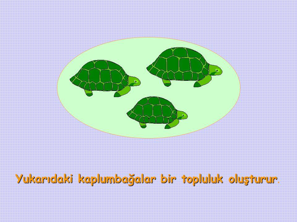 Yukarıdaki kaplumbağalar bir topluluk oluşturur.