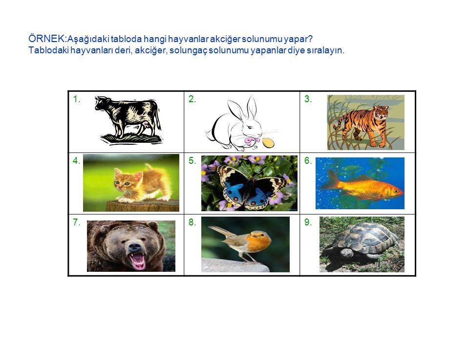 ÖRNEK:Aşağıdaki tabloda hangi hayvanlar akciğer solunumu yapar