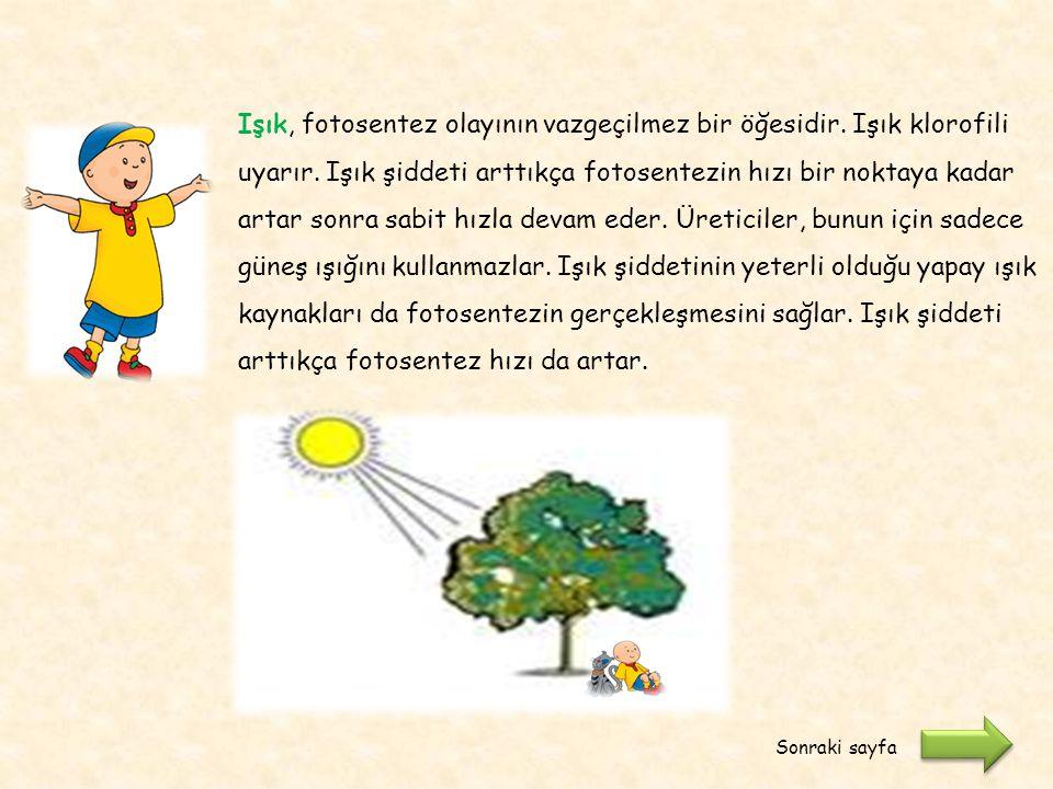 Işık, fotosentez olayının vazgeçilmez bir öğesidir