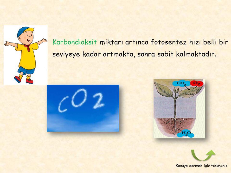 Karbondioksit miktarı artınca fotosentez hızı belli bir seviyeye kadar artmakta, sonra sabit kalmaktadır.