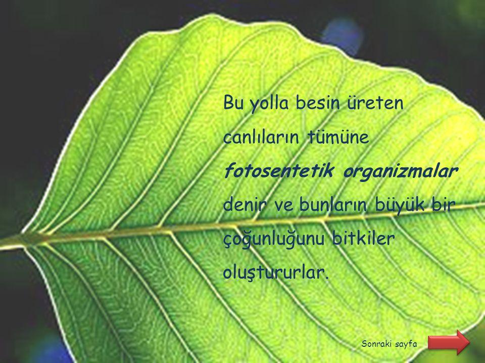 Bu yolla besin üreten canlıların tümüne fotosentetik organizmalar denir ve bunların büyük bir çoğunluğunu bitkiler oluştururlar.