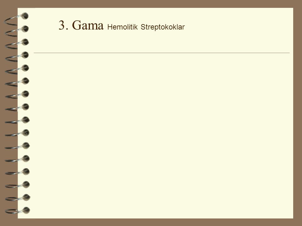 3. Gama Hemolitik Streptokoklar