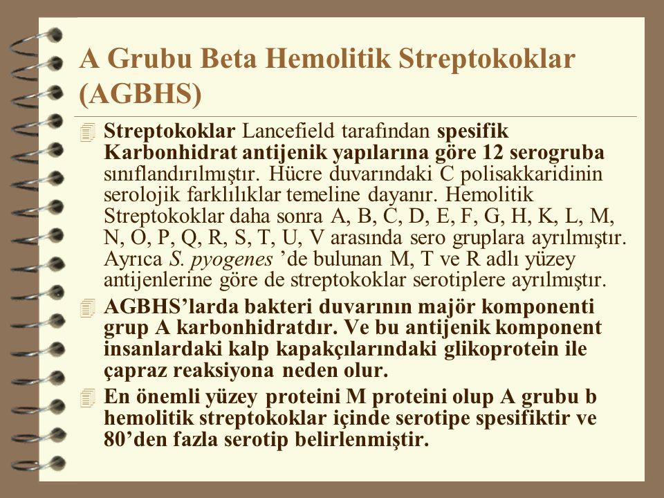 A Grubu Beta Hemolitik Streptokoklar (AGBHS)