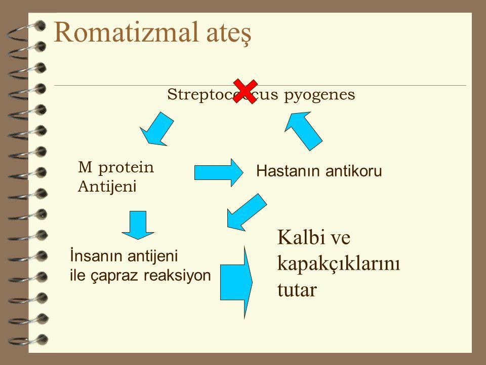 Romatizmal ateş Kalbi ve kapakçıklarını tutar Streptococcus pyogenes