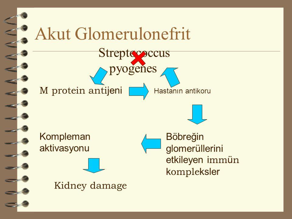 Akut Glomerulonefrit Streptococcus pyogenes M protein antijeni
