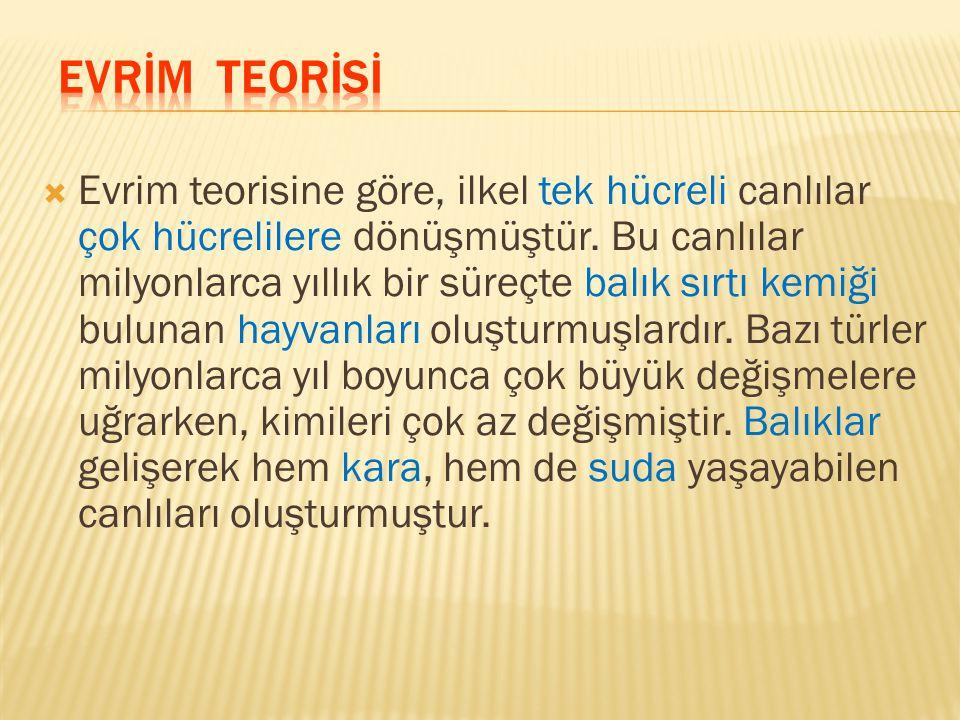 EVRİM TEORİSİ