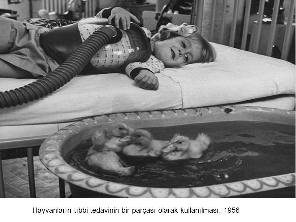 Hayvanların tıbbi tedavinin bir parçası olarak kullanılması, 1956