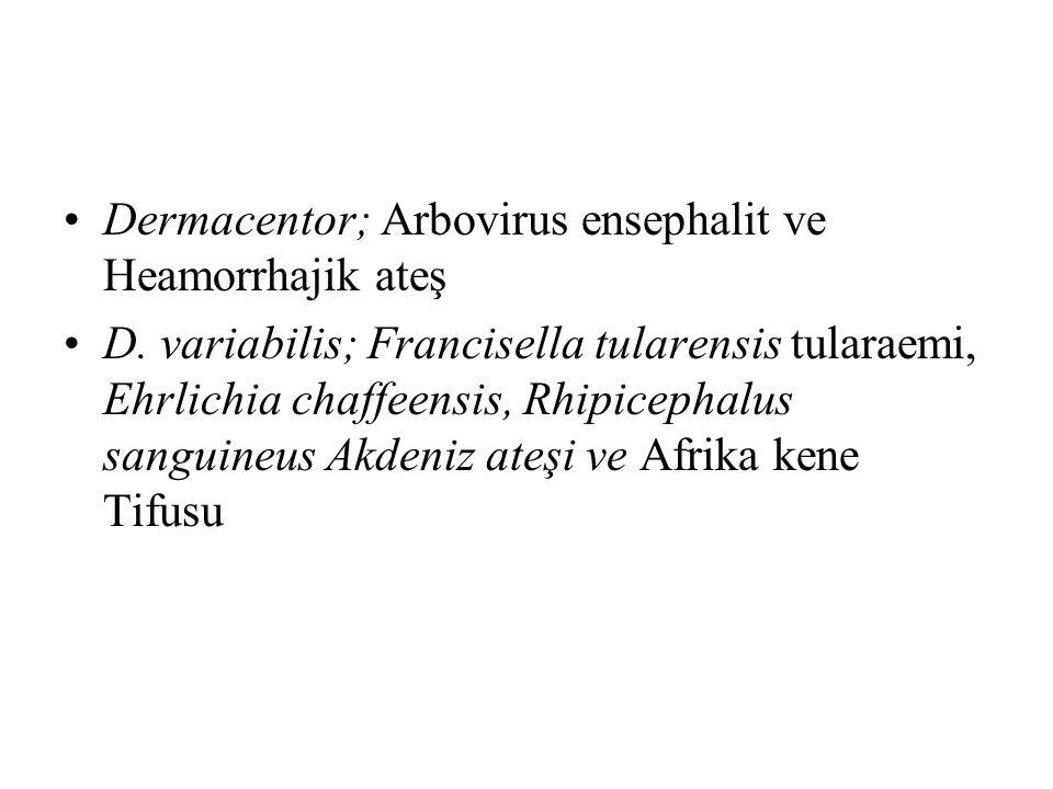 Dermacentor; Arbovirus ensephalit ve Heamorrhajik ateş