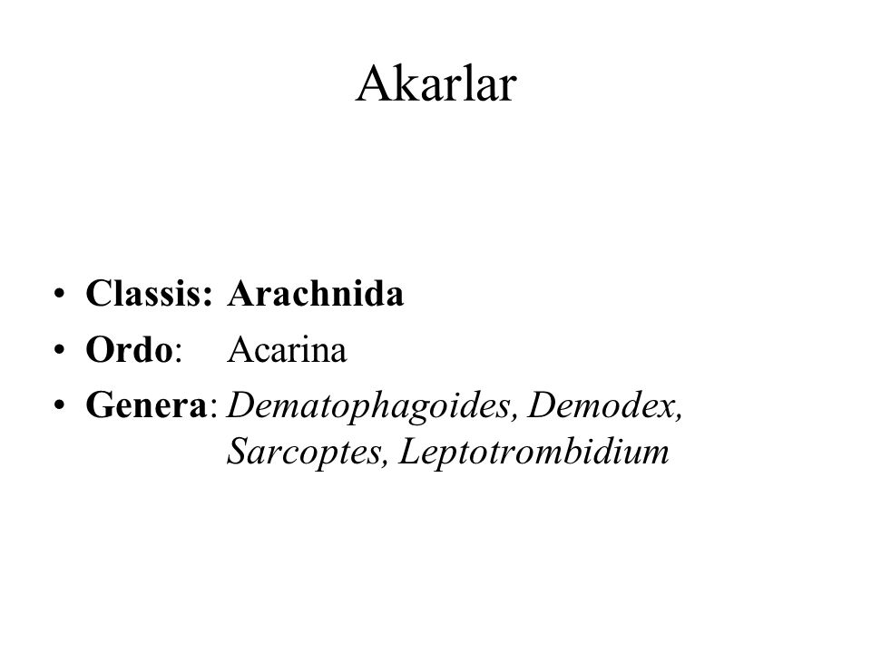 Akarlar Classis: Arachnida Ordo: Acarina