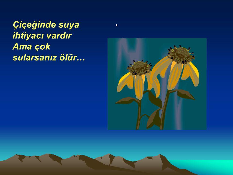 . Çiçeğinde suya ihtiyacı vardır Ama çok sularsanız ölür…