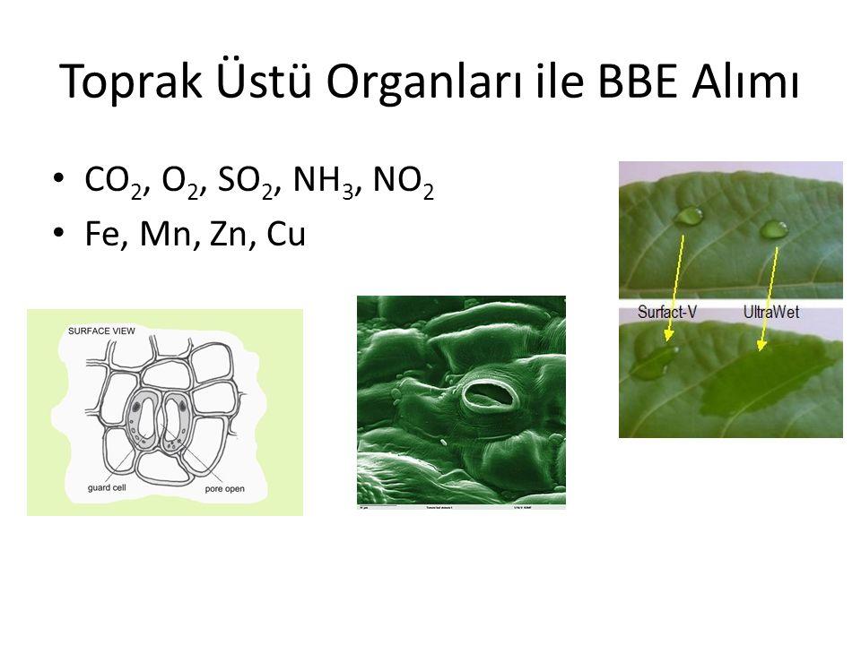 Toprak Üstü Organları ile BBE Alımı