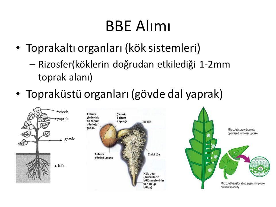 BBE Alımı Toprakaltı organları (kök sistemleri)
