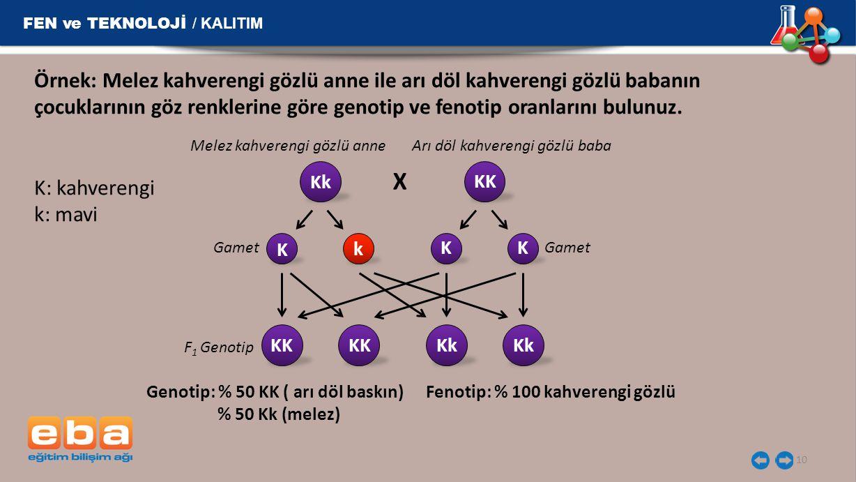 X FEN ve TEKNOLOJİ / KALITIM