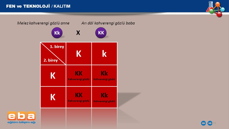 K k K K X KK Kk KK Kk FEN ve TEKNOLOJİ / KALITIM Kk KK