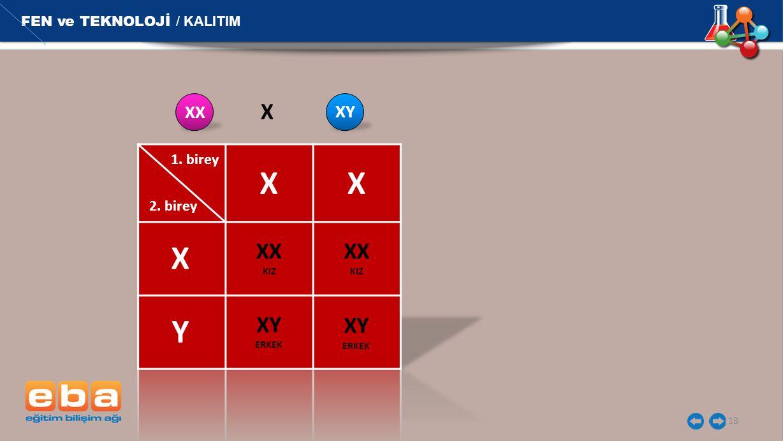 X X X Y X XX XX XY XY FEN ve TEKNOLOJİ / KALITIM XX XY 1. birey