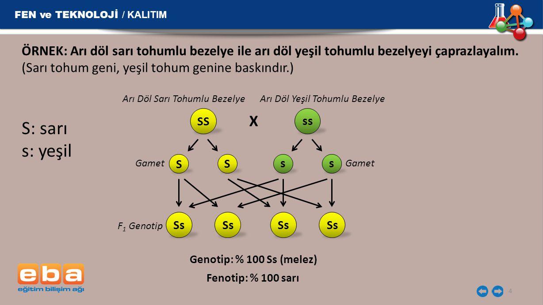 S: sarı s: yeşil X FEN ve TEKNOLOJİ / KALITIM