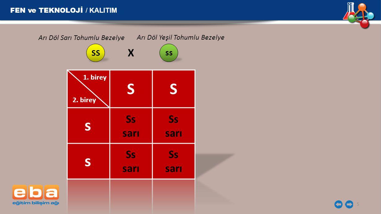 S S s s X Ss sarı Ss sarı Ss sarı Ss sarı FEN ve TEKNOLOJİ / KALITIM