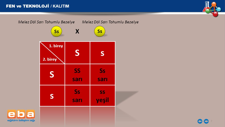 S s S s X SS sarı Ss sarı Ss sarı ss yeşil FEN ve TEKNOLOJİ / KALITIM