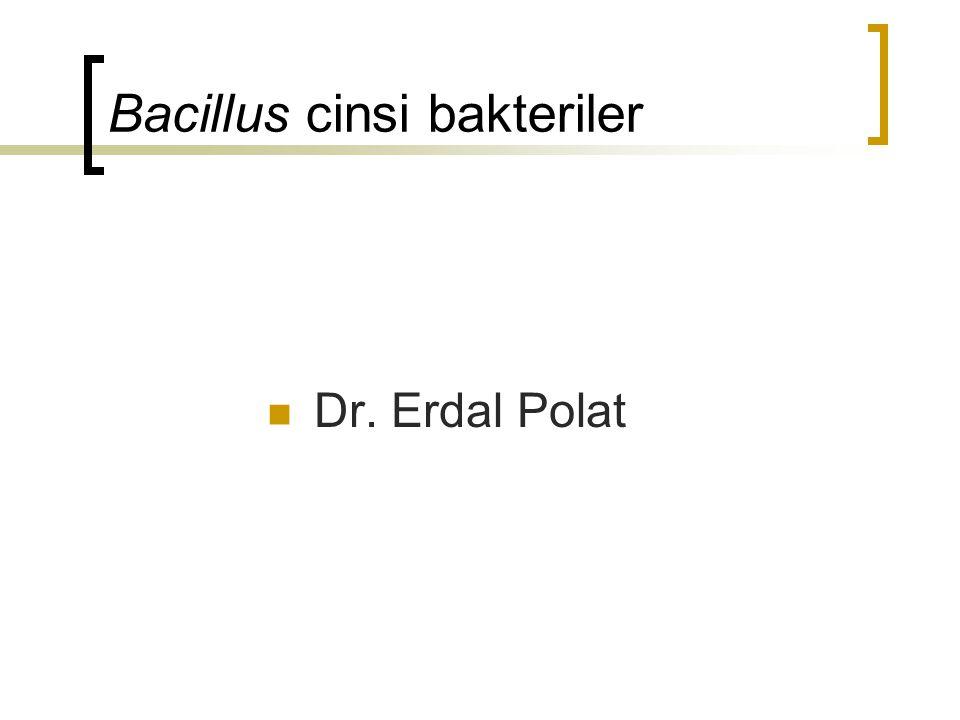 Bacillus cinsi bakteriler
