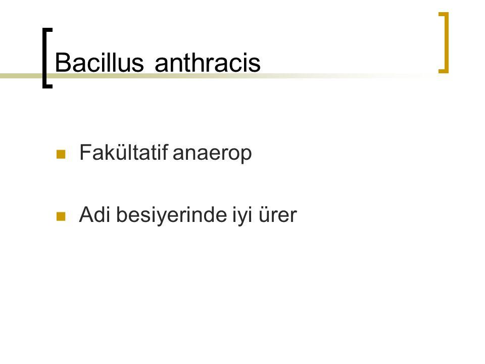 Bacillus anthracis Fakültatif anaerop Adi besiyerinde iyi ürer
