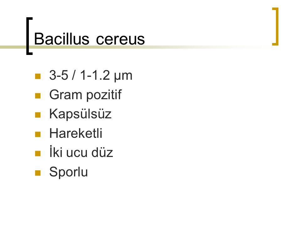 Bacillus cereus 3-5 / 1-1.2 µm Gram pozitif Kapsülsüz Hareketli