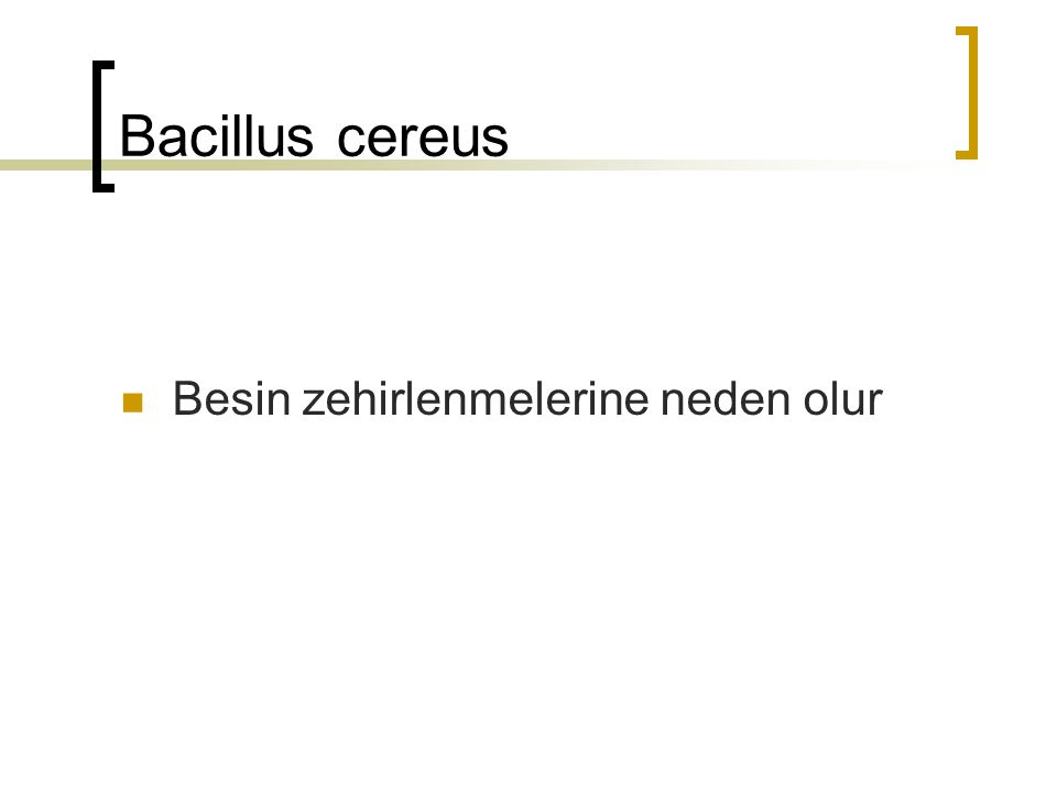 Bacillus cereus Besin zehirlenmelerine neden olur