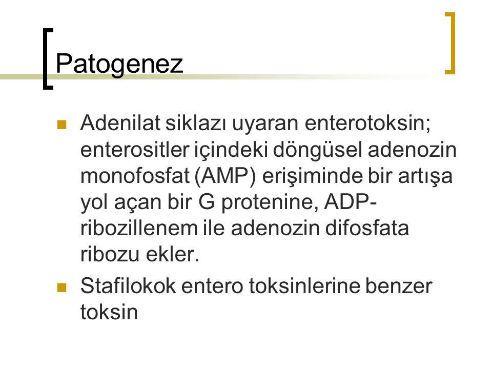 Patogenez