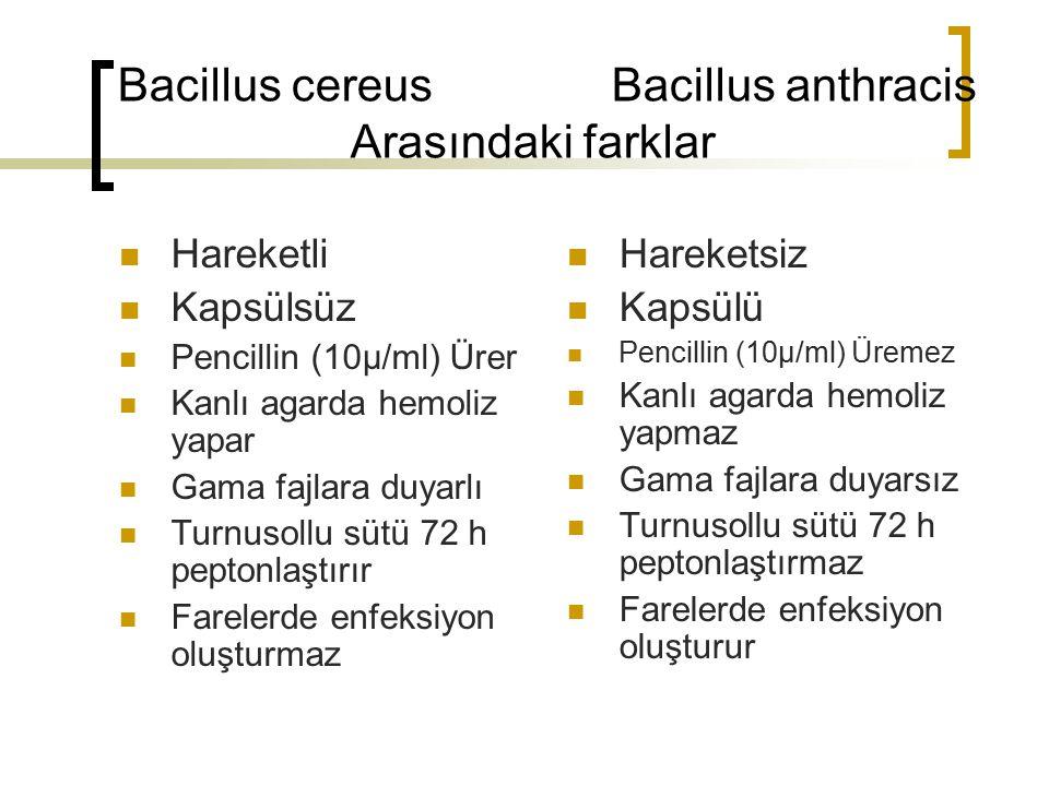 Bacillus cereus Bacillus anthracis Arasındaki farklar